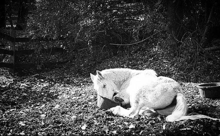 horse-eat