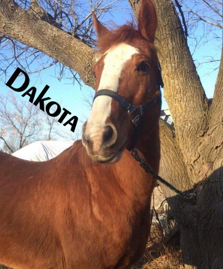 dakota1