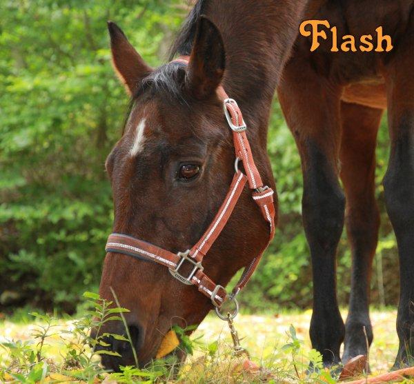 flashygirl1